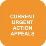 CURRENT APPEALS